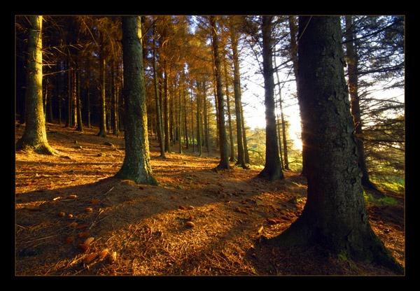 Through the woods by garyg