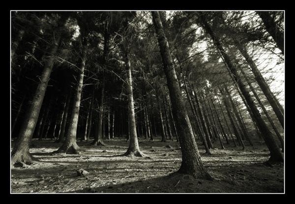 Spooky woods by garyg