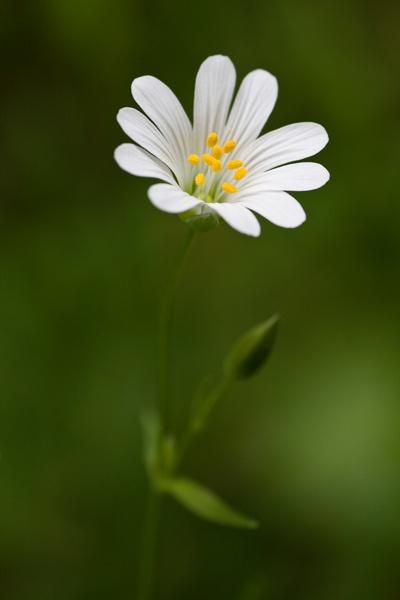 Wild Flower by Gareth_H
