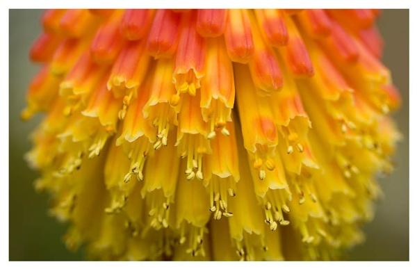 Flower3 by Fearniespurs
