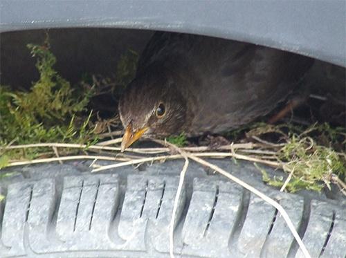 birds nest !!! by denise3562