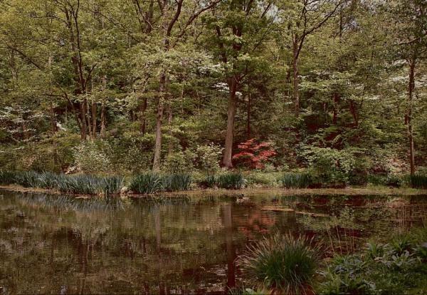 Botanical Garden by Rainy
