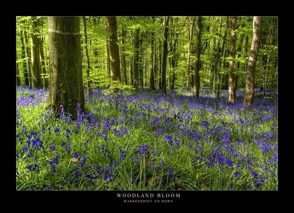 Woodland Bloom by maytownme