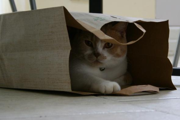 Cat in the bag! by Steve_Murphy