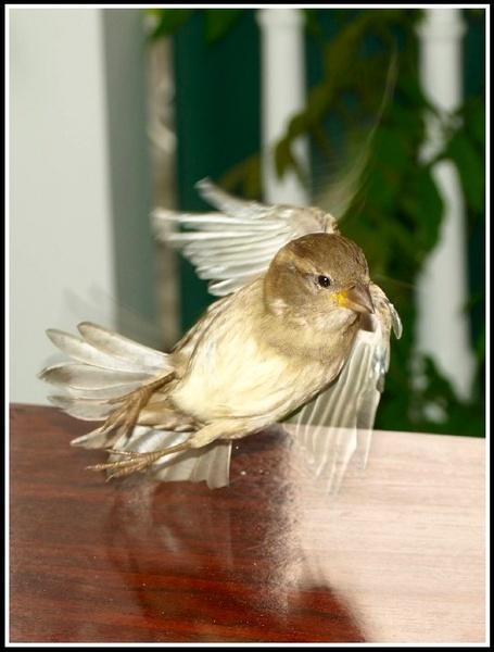 Take off by welshjohn