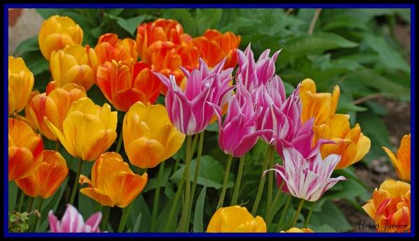 flowers by ducatifogarty