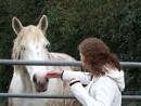 Horse by mattbroomer2000