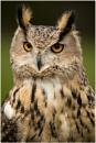 Turkmenian Eagle Owl by dark_lord