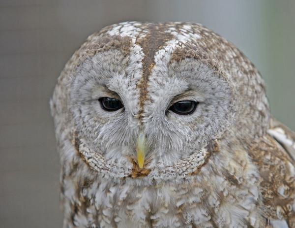 Owl by jamil