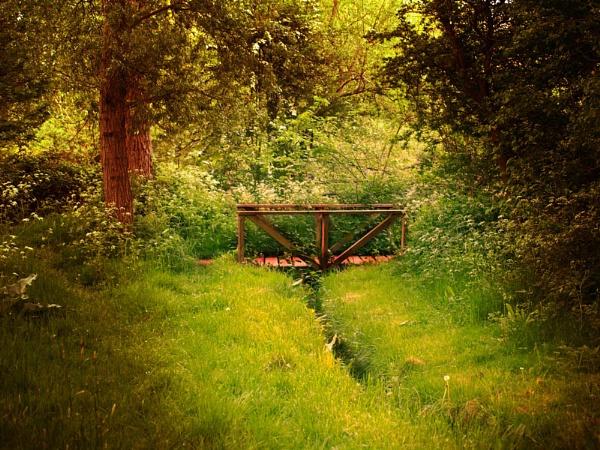 Secret Bridge In The Woods by chensuriashi