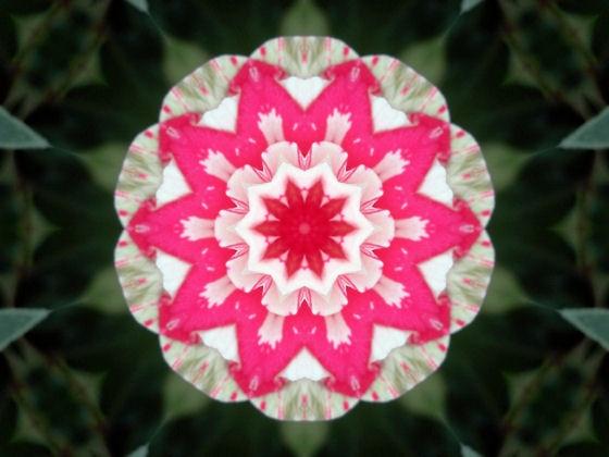 funky rose by jaecat