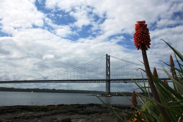 Aloe Vera and the Bridge by Jimbotha