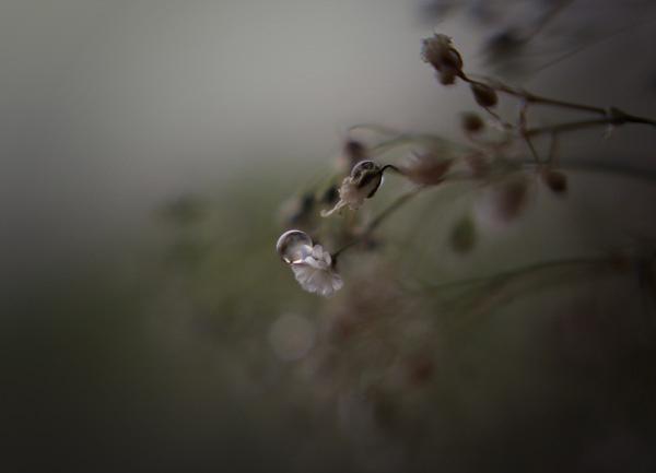 solitude by ClaudiJay