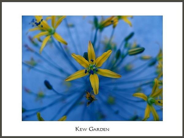 Kew Garden by andreasjonsson