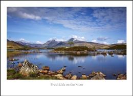 Fresh Life on the Moor...