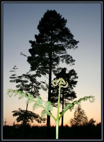 Bright Fern by X5DJM