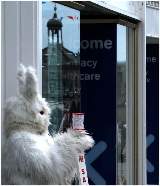 white rabbit ? by aitchbrown