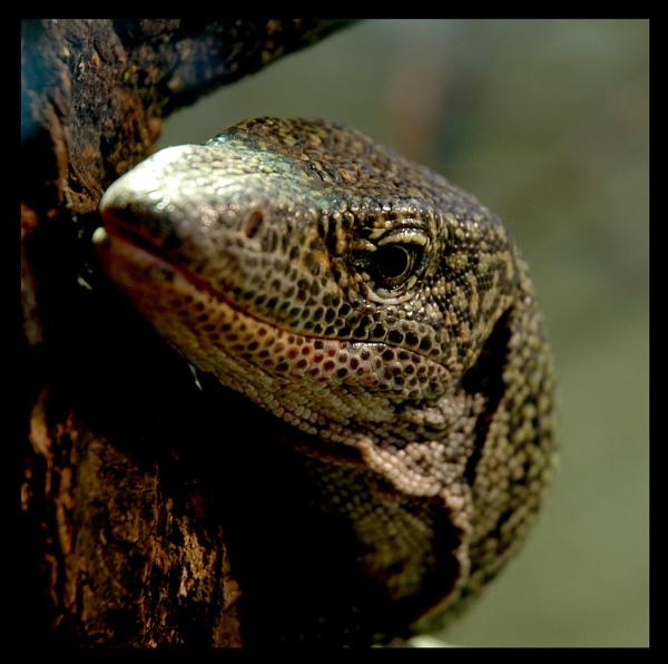 Lizard by LizzieN