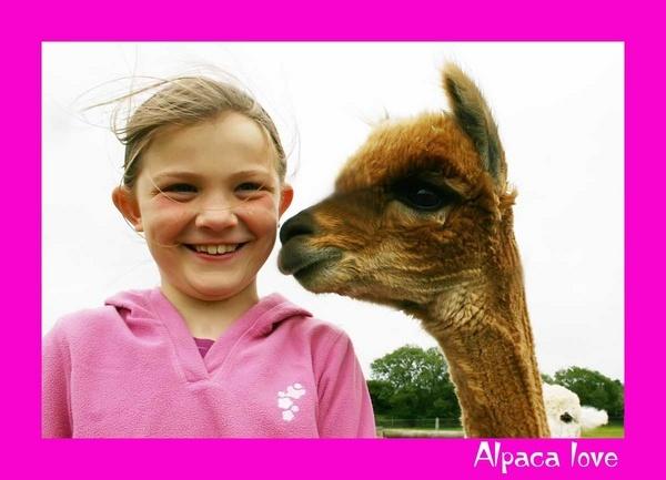 Alpaca Love! by SuPlied