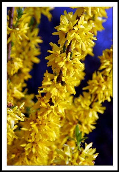In Bloom by emefbee