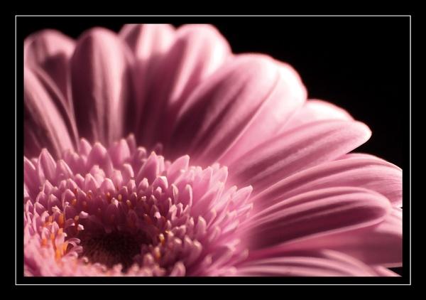 Painted Pink by emefbee