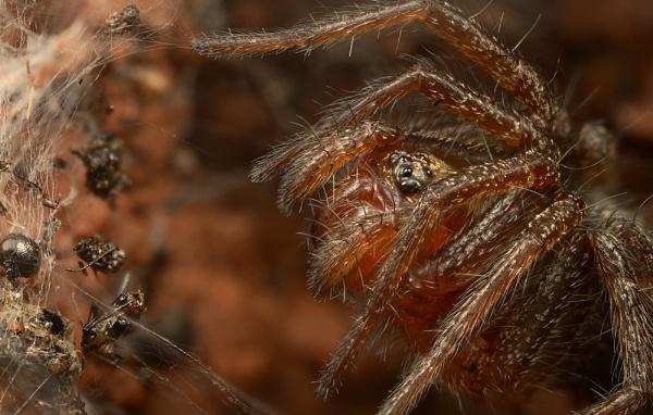Grass Spider by alliec