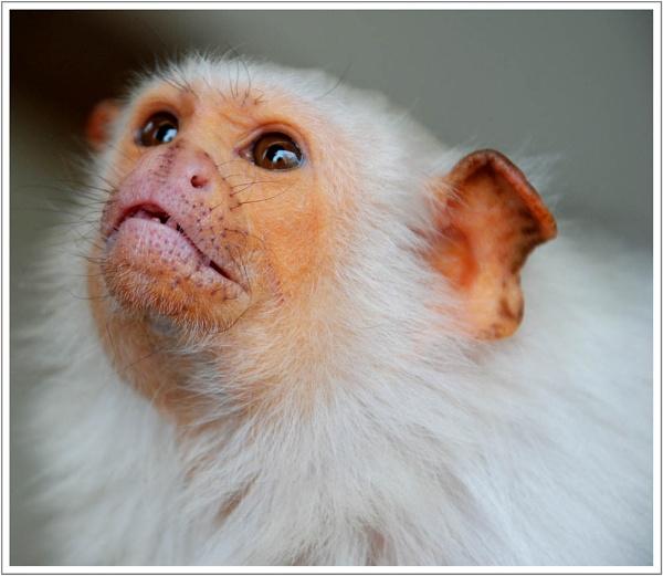 Cute or Ugly?? by blondiebee