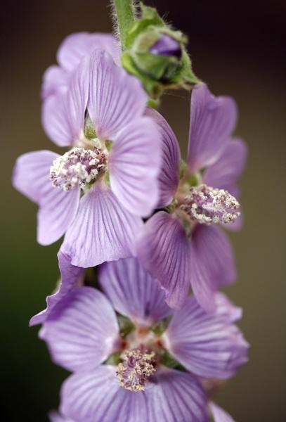 Lilac Lady by brianhaslam