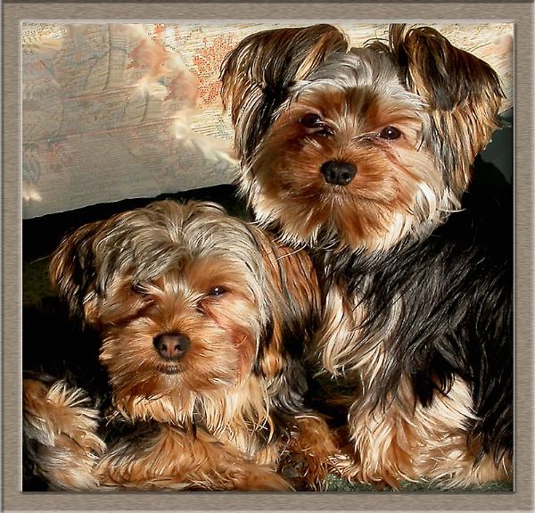 Poppy & Millie by derekv