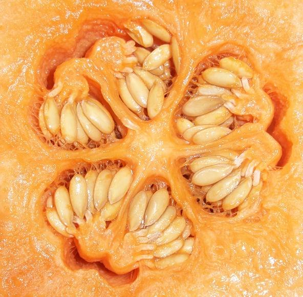 melon close up by jaecat