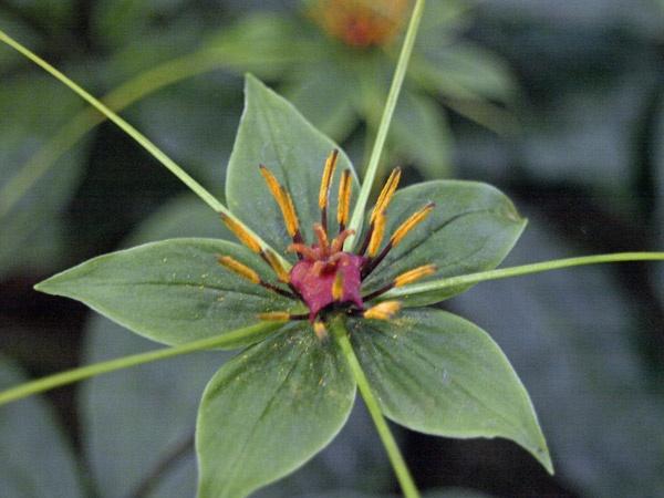 Strange flower by Tournisol