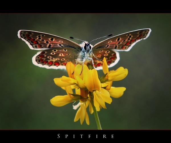 Spitfire by celestun