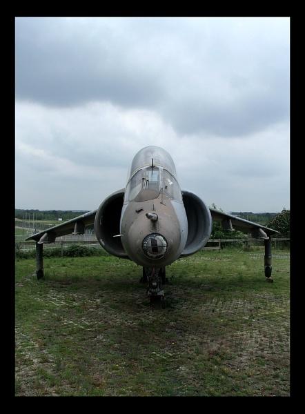 Harrier by mohikan22