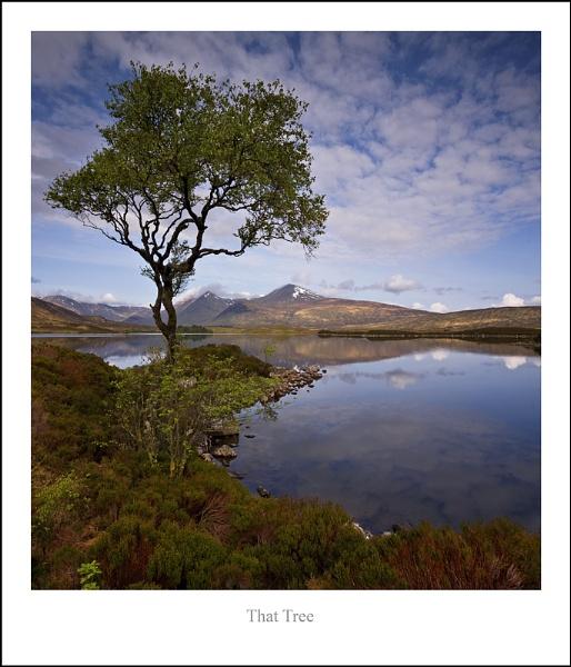 That Tree... by Scottishlandscapes