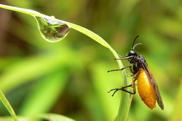 After Rain (Sawfly ?) by KarlmarxEra