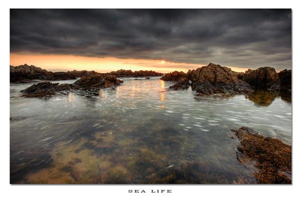 Sea Life by chris-p