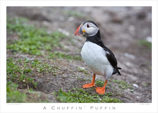 A Chuffin\' Puffin by sherlob