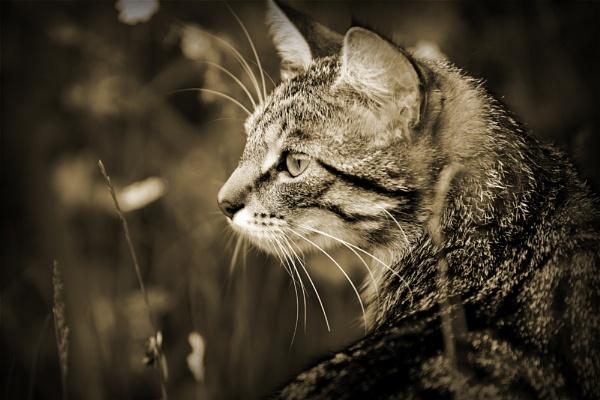 Lucy by emefbee