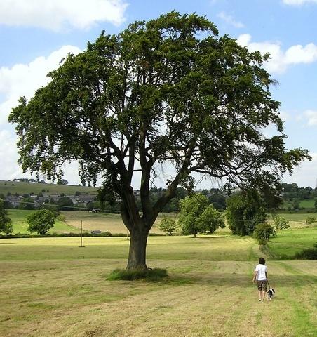Big Tree/Little People by MissPea