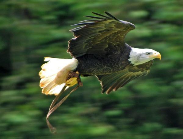 In flight by lornem