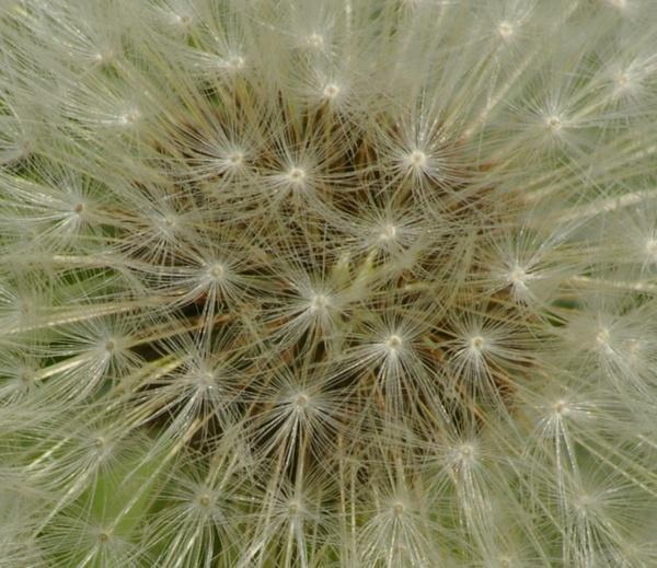 Make a wish by Sulaco