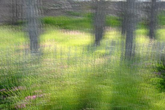 Trees multi exposure by RosePhoto