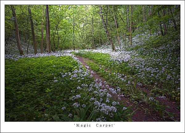 Magic Carpet by oll1e