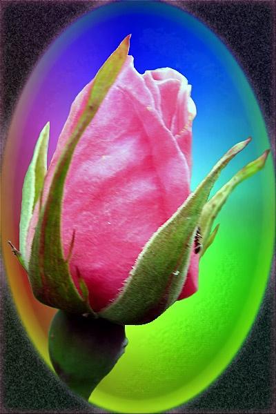 Rose by digiray63