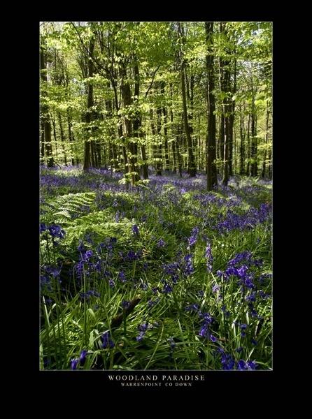 Woodland Paradise by maytownme