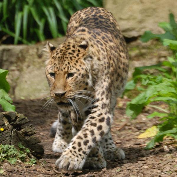 prowler by grumpalot