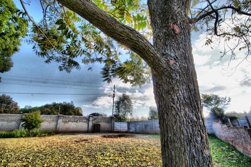 Tree Bracnh by harryhcs