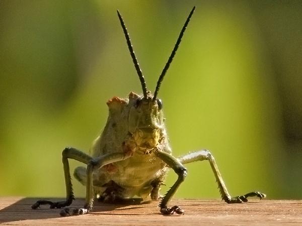 Ugly Bug by ShedMan