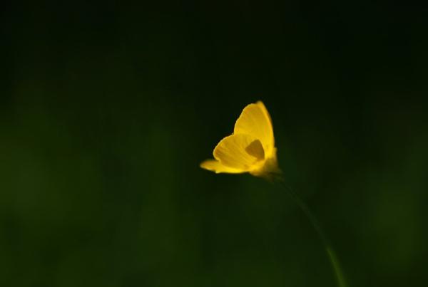 light by emefbee
