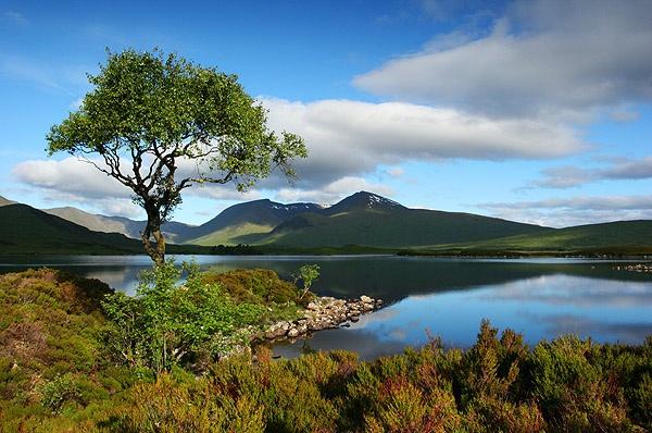 Island Tree by trekpete